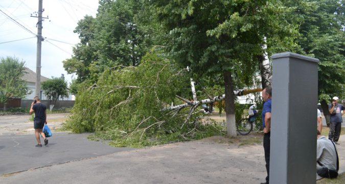 У Лебедині на автомобіль вітер звалив дерево